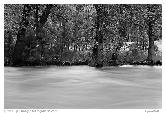Merced River and trees on bank at sunset. Yosemite National Park (black and white)