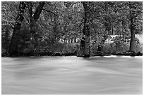 Merced River and trees on bank at sunset. Yosemite National Park ( black and white)