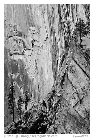 Trees and cliff, Diving Board. Yosemite National Park (black and white)