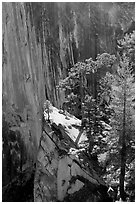 Pine trees on the Diving Board. Yosemite National Park, California, USA. (black and white)