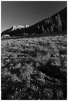 Lyell Canyon, late afternoon. Yosemite National Park ( black and white)