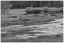 Deer in meadow next to river, Lyell Canyon. Yosemite National Park, California, USA. (black and white)
