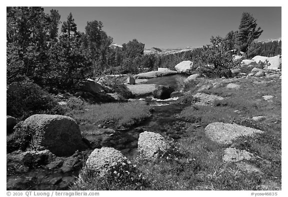 Stream and alpine meadow. Yosemite National Park (black and white)