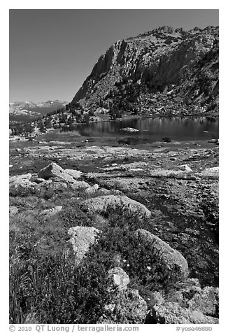 Alpine flowers above Vogelsang Lake. Yosemite National Park (black and white)