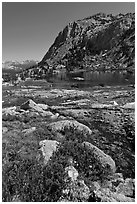 Alpine flowers above Vogelsang Lake. Yosemite National Park ( black and white)