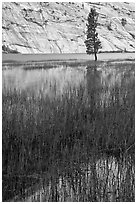 Tree and reflections, Merced Lake. Yosemite National Park, California, USA. (black and white)