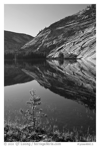 Pine sappling and granite domes reflected, Merced Lake. Yosemite National Park (black and white)