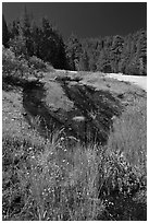 Wet rock slab and wildflowers. Yosemite National Park, California, USA. (black and white)