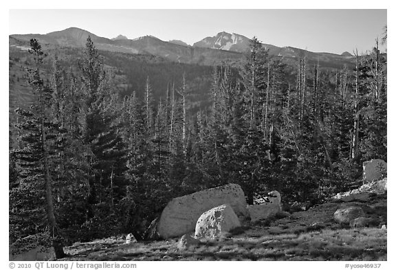 Sunrise over forest and peaks. Yosemite National Park (black and white)