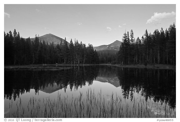 Mt Dana and Mt Gibbs reflected in tarn at sunset. Yosemite National Park (black and white)