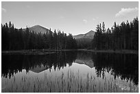 Mt Dana and Mt Gibbs reflected in tarn at sunset. Yosemite National Park ( black and white)