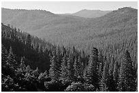 Hills covered in forest, Wawona. Yosemite National Park ( black and white)