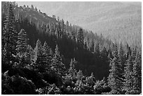 Forested slopes, Wawona. Yosemite National Park ( black and white)