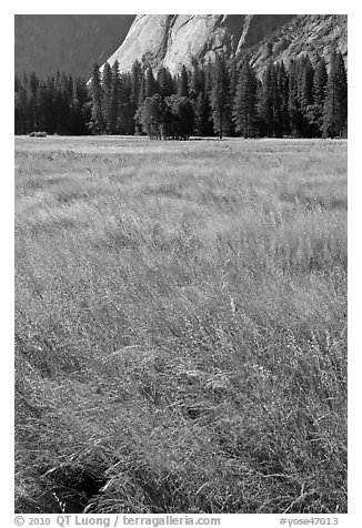 Summer grasses, Ahwanhee Meadow. Yosemite National Park (black and white)