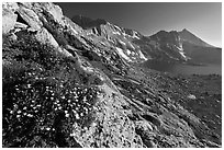 Wildflowers on slope, Upper McCabe Lake and Sheep Peak. Yosemite National Park, California, USA. (black and white)