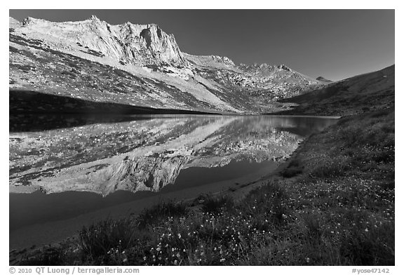 Flowers, Sheep Peak reflected in Roosevelt Lake. Yosemite National Park (black and white)