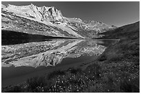 Flowers, Sheep Peak reflected in Roosevelt Lake. Yosemite National Park, California, USA. (black and white)