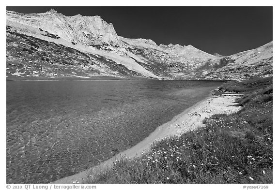 Sierra lakeshore with flowers and reflected mountain. Yosemite National Park (black and white)