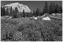 Flowers, pine trees, and mountain. Yosemite National Park, California, USA. (black and white)