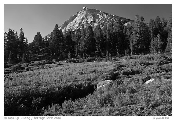 Sub-alpine scenery with flowers, stream, forest, and peak. Yosemite National Park (black and white)