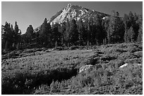 Sub-alpine scenery with flowers, stream, forest, and peak. Yosemite National Park, California, USA. (black and white)