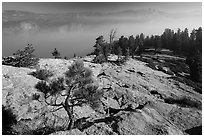 Pine sapling on Sentinel Dome, Valley in smoke. Yosemite National Park ( black and white)