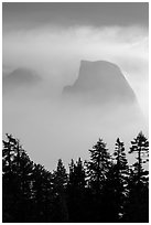 Half-Dome and Clouds Rest in fog above tree line. Yosemite National Park ( black and white)
