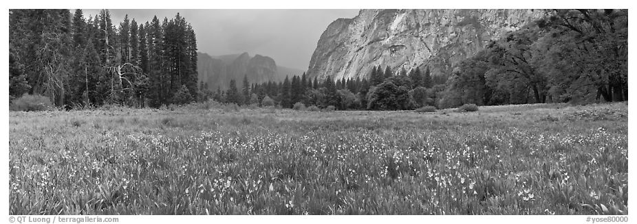 Cook Meadow, spring storm, looking towards Catheral Rocks. Yosemite National Park (black and white)
