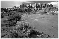 Wildflowers, sandstone pillars, Klondike Bluffs. Arches National Park, Utah, USA. (black and white)