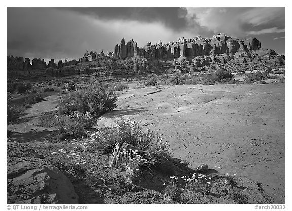 Wildflowers and rock pillars, Klondike Bluffs. Arches National Park (black and white)