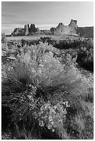 Shrub, cottonwoods and sandstone towers. Arches National Park ( black and white)