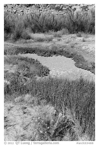 Creek near Wolfe Ranch. Arches National Park (black and white)