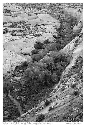 Trees in Winter Camp Wash. Arches National Park (black and white)