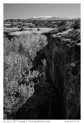 Cottonwood trees, Courthouse Wash creek and cliffs, La Sal mountains. Arches National Park (black and white)