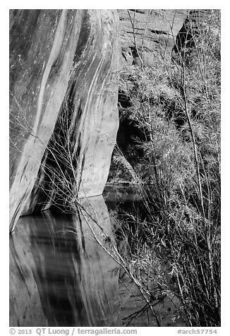 Sandstone walls, willows, and reflections, Courthouse Wash. Arches National Park (black and white)
