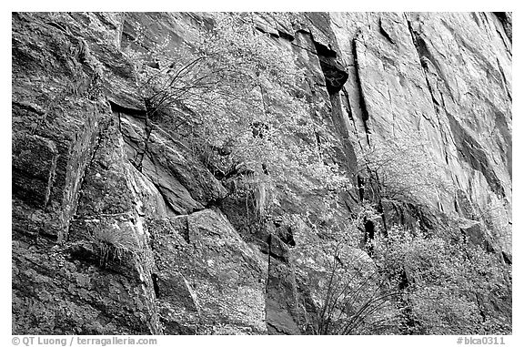 Side canyon wall. Black Canyon of the Gunnison National Park (black and white)
