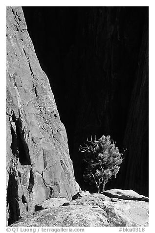 Tree on rim near exclamation point. Black Canyon of the Gunnison National Park (black and white)