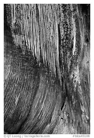 Juniper trunk close-up. Black Canyon of the Gunnison National Park (black and white)
