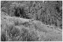 Grasses and canyon walls, East Portal. Black Canyon of the Gunnison National Park, Colorado, USA. (black and white)