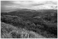 Rolling hills and storm in autumn. Black Canyon of the Gunnison National Park, Colorado, USA. (black and white)