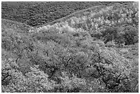 Hills with trees in autumn color. Black Canyon of the Gunnison National Park ( black and white)
