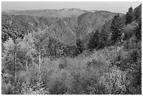 Shrubs and trees in fall color on canyon rim. Black Canyon of the Gunnison National Park ( black and white)