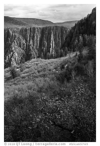 Gambel Oak and serviceberries color slopes above the canyon. Black Canyon of the Gunnison National Park (black and white)