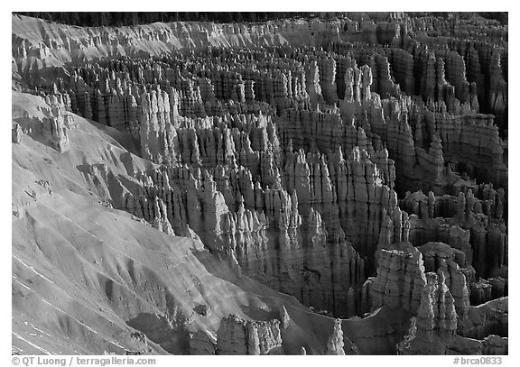 Silent City dense cluster of hoodoos from Bryce Point, sunrise. Bryce Canyon National Park (black and white)