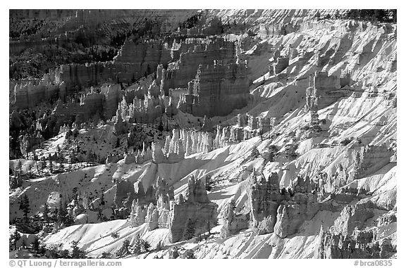 Hoodoos and snow in Bryce Amphitheater, early morning. Bryce Canyon National Park (black and white)