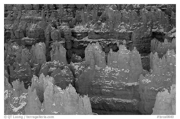 Glowing Hoodoos from Sunset Point, afternoon. Bryce Canyon National Park (black and white)