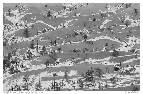 Ridges, snow, and trees. Bryce Canyon National Park (black and white)