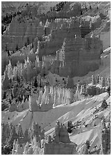 Hoodoos and snow from Sunrise Point, winter sunrise. Bryce Canyon National Park ( black and white)