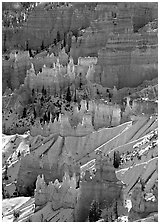 Hoodoos glowing in Bryce Amphitheater, early morning. Bryce Canyon National Park ( black and white)