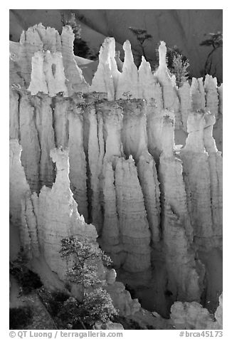 Pink Member of the Claron Formation. Bryce Canyon National Park (black and white)